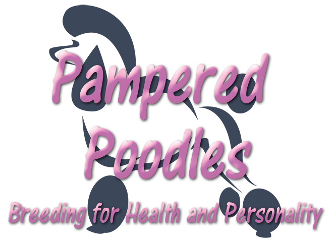 Pampered Poodles